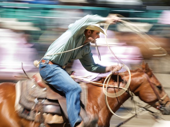 Tie-down roper Sterling Smith of Stephenville, TX competes at the Rowell Ranch Rodeo in Hayward, CA.