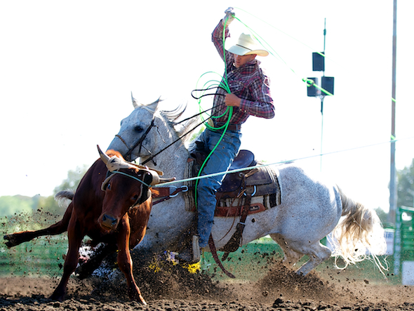 Team roper Blaine Ketscher of Paso Robles, CA competes at the Livermore Rodeo in Livermore, CA.