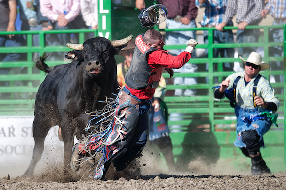 Bull rider Ben Miles III of La Grange, CA takes a shot from Crystal Clear at the Livermore Rodeo in Livermore, CA.