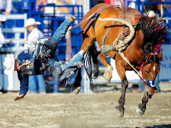 Saddle bronc rider Jesse Wright of Milford, UT gets bucked off Hat Stomper at the Rancho Mission Viejo Rodeo in San Juan Capistrano, CA.